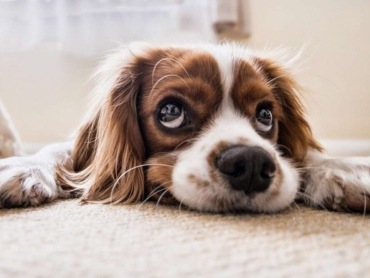 dog-image-reiki-for-animals